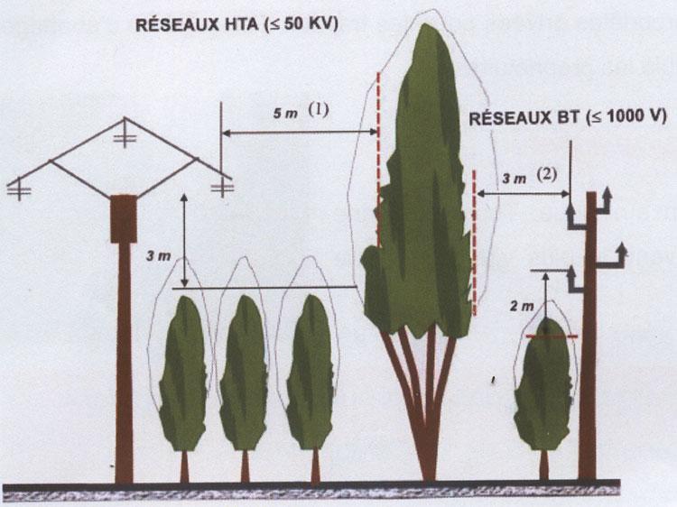 elagage arbre edf